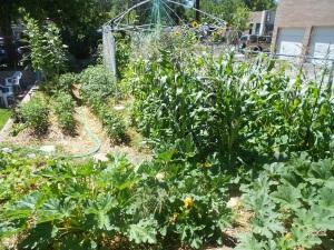 Garden #2, on July 25, 2012