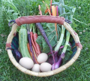 Chard... and carrots, onions, zucchini, eggs... a tasty dinner.