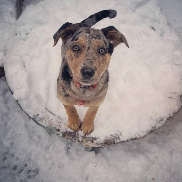 ripley-snow-1-5-17