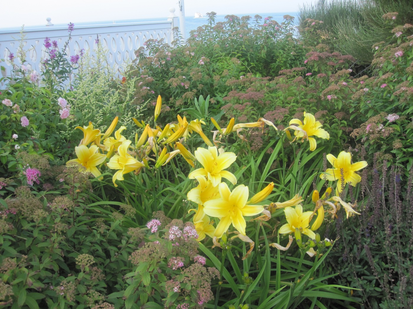 are-daylilies-edible